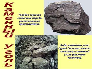 Твердое горючие осадочные породы растительного происхождения. Виды каменного