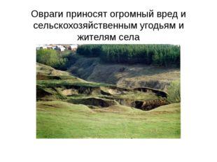 Овраги приносят огромный вред и сельскохозяйственным угодьям и жителям села