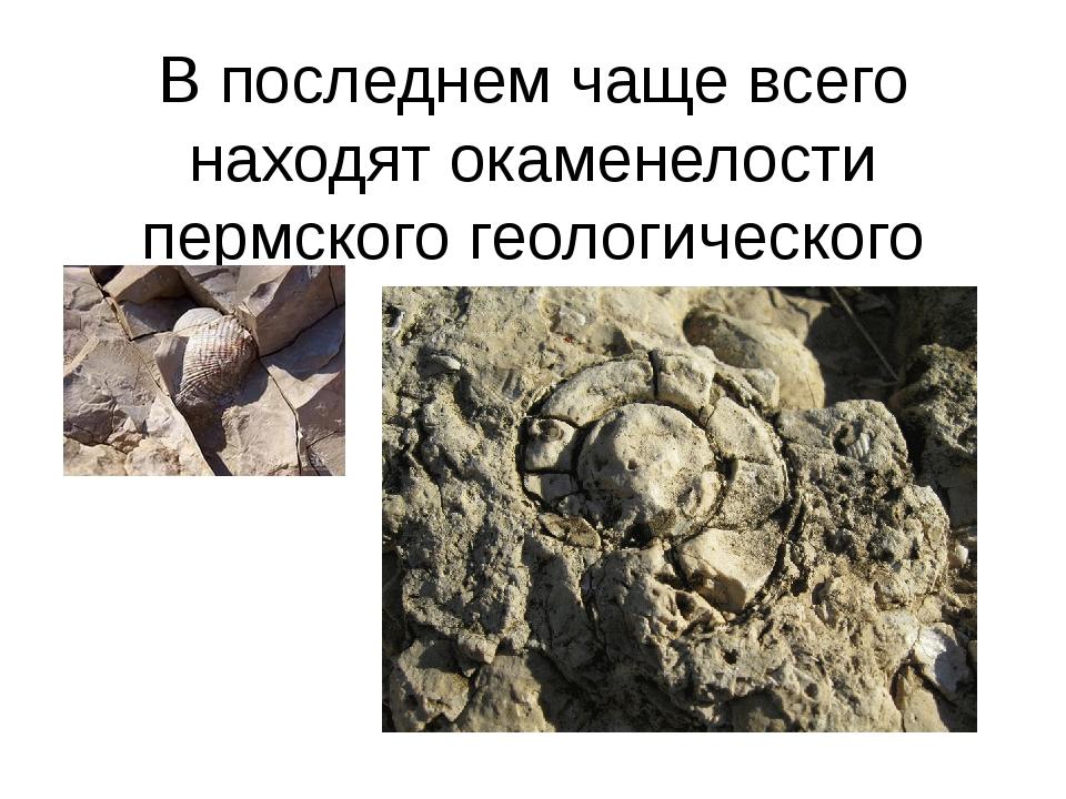 В последнем чаще всего находят окаменелости пермского геологического периода