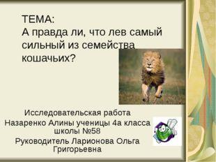 ТЕМА: А правда ли, что лев самый сильный из семейства кошачьих? Исследователь