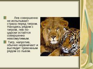 Лев совершенно не испытывает страха перед тигром. Находясь рядом с ти