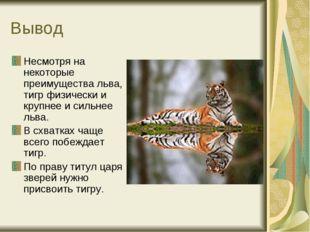 Вывод Несмотря на некоторые преимущества льва, тигр физически и крупнее и сил