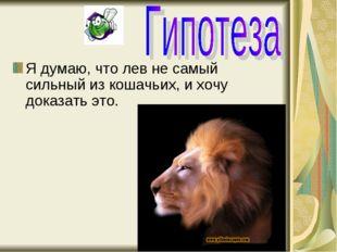 Я думаю, что лев не самый сильный из кошачьих, и хочу доказать это.