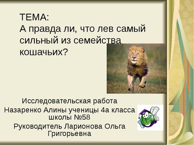 ТЕМА: А правда ли, что лев самый сильный из семейства кошачьих? Исследователь...