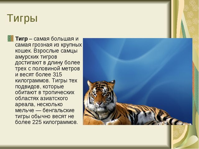 Тигры Тигр – самая большая и самая грозная из крупных кошек. Взрослые самцы а...
