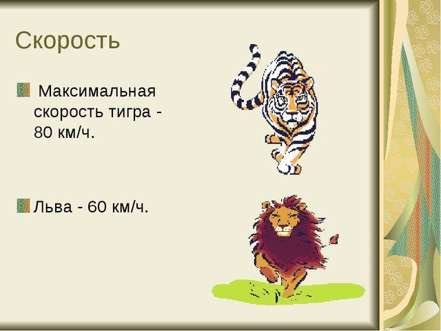 Скорость Максимальная скорость тигра - 80 км/ч. Льва - 60 км/ч.