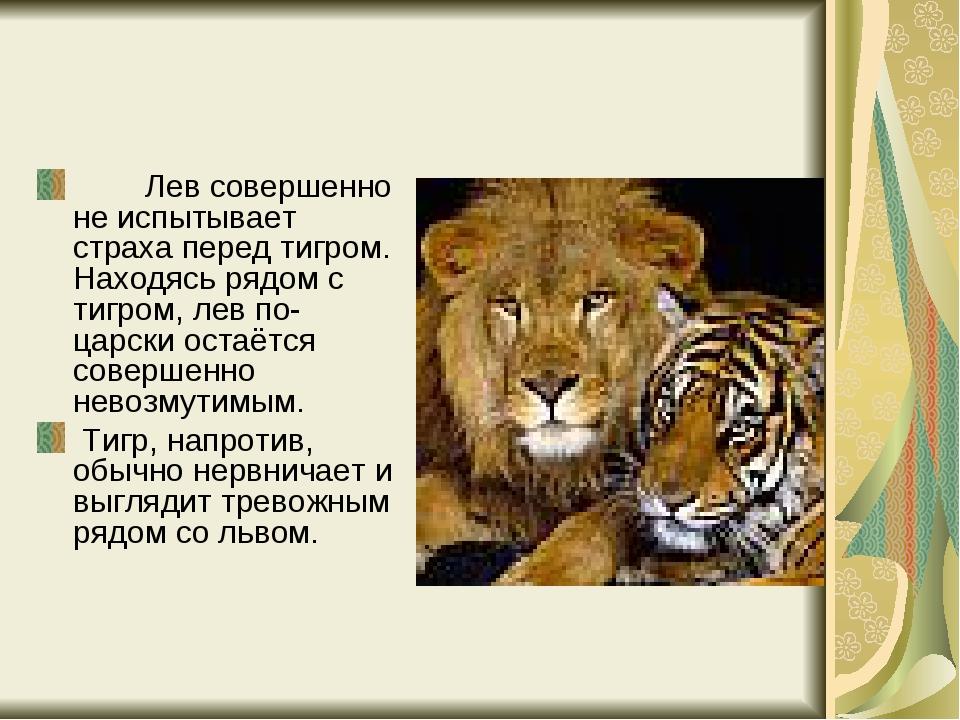 Лев совершенно не испытывает страха перед тигром. Находясь рядом с ти...