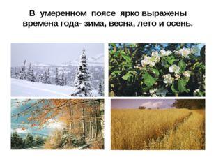 В умеренном поясе ярко выражены времена года- зима, весна, лето и осень.