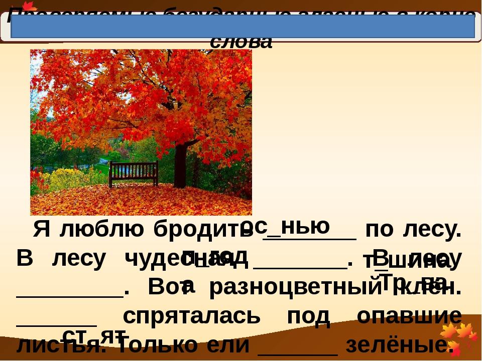Проверяемые безударные гласные в корне слова Я люблю бродить _______ по лесу....