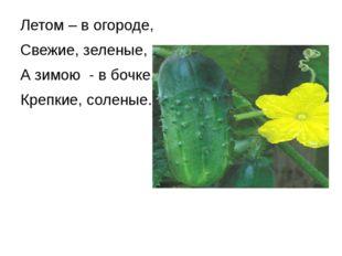 Летом – в огороде, Свежие, зеленые, А зимою - в бочке, Крепкие, соленые.