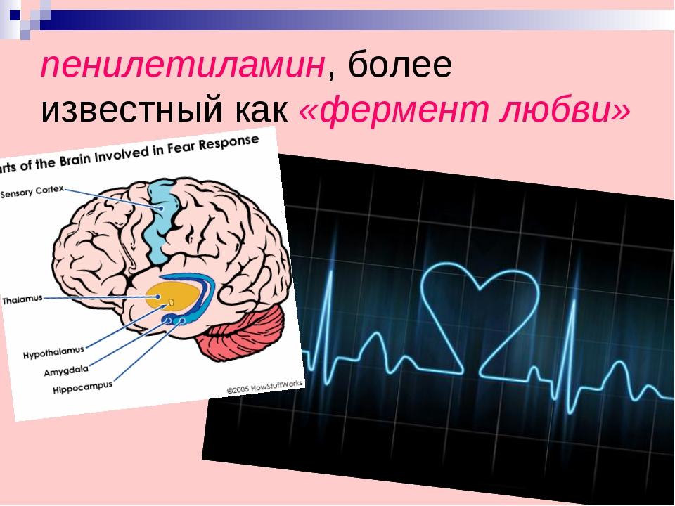 пенилетиламин, более известный как «фермент любви»