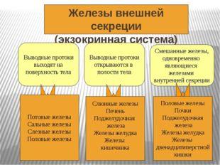 Железы внешней секреции (экзокринная система) Выводные протоки выходят на пов