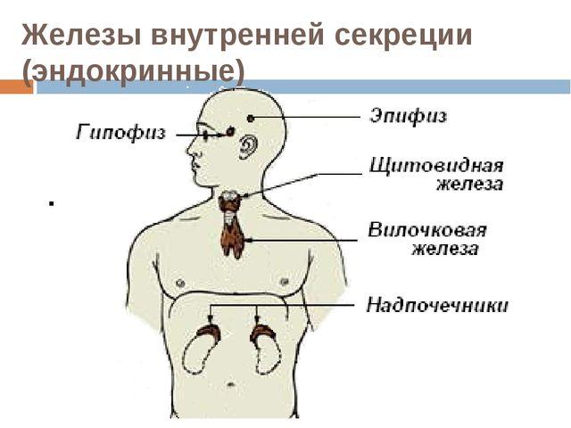 Железы внутренней секреции (эндокринные)
