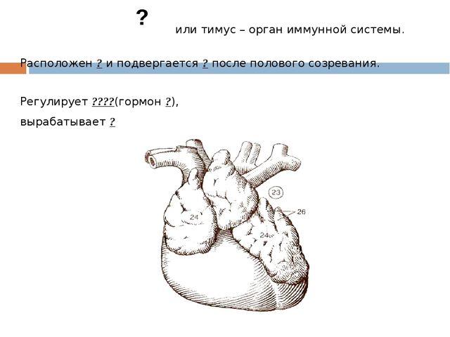 или тимус – орган иммунной системы. Расположен ? и подвергается ? после поло...