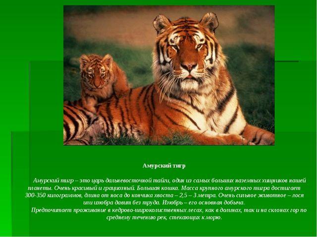 Амурский тигр    Амурский тигр – это царь дальневосточной тайги, один из...