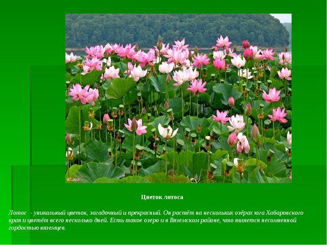 Цветок лотоса Лотос - уникальный цветок, загадочный и прекрасный. Он растёт...