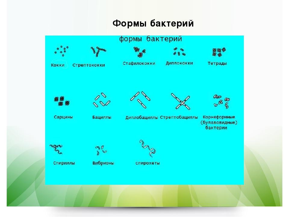 Формы бактерий