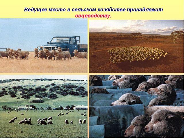 Ведущее место в сельском хозяйстве принадлежит овцеводству.