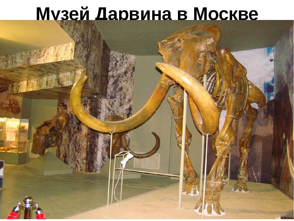 Музей Дарвина в Москве