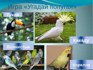 Игра «Угадай попугая» Тукан Какаду Волнистые Корелла