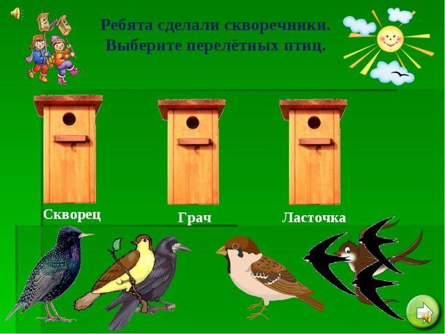 Ребята сделали скворечники. Выберите перелётных птиц. Скворец Грач Ласточка