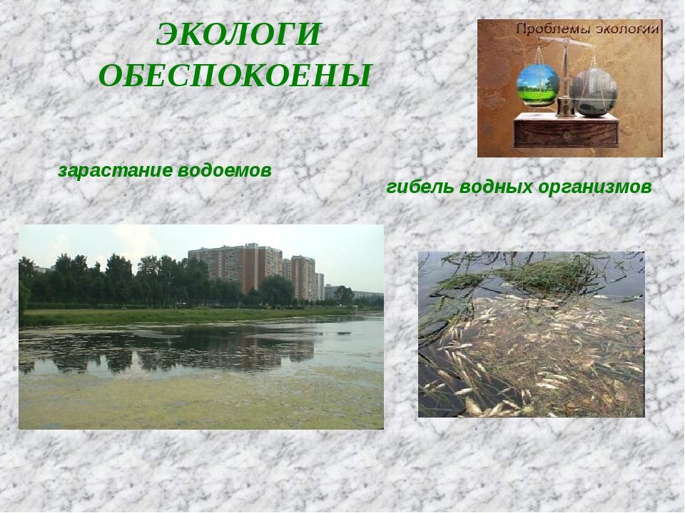 ЭКОЛОГИ ОБЕСПОКОЕНЫ зарастание водоемов гибель водных организмов