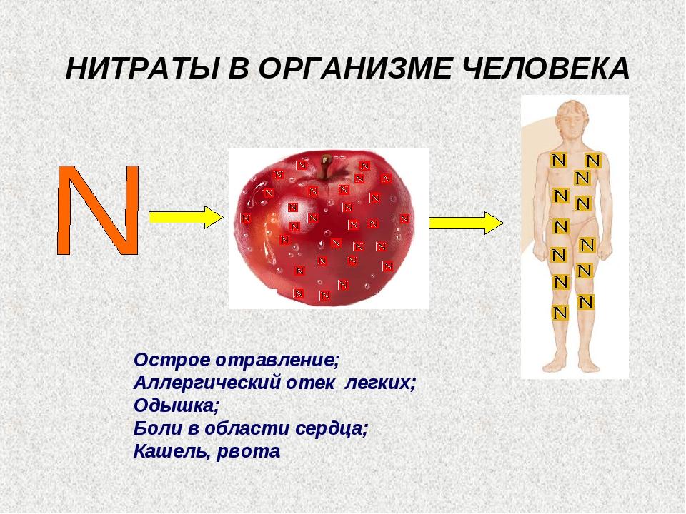 НИТРАТЫ В ОРГАНИЗМЕ ЧЕЛОВЕКА Острое отравление; Аллергический отек легких; О...