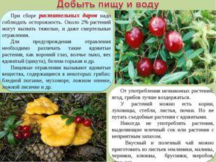 При сборе растительных даров надо соблюдать осторожность. Около 2%растений м