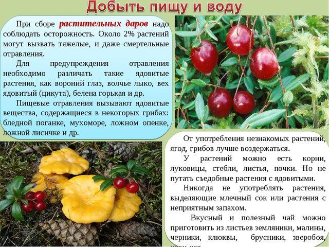 При сборе растительных даров надо соблюдать осторожность. Около 2%растений м...