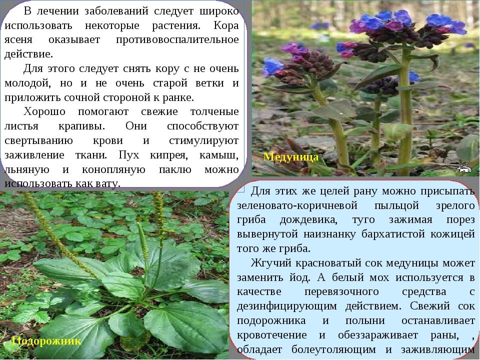 В лечении заболеваний следует широко использовать некоторые растения. Кора яс...