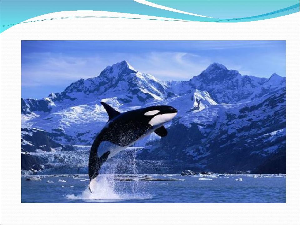 Картинки 19 февраля всемирный день млекопитающих