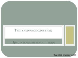 Пресноводный полип гидра Тип кишечнополостные Чвановой Елизаветы 7Н