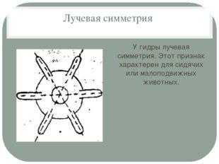 Лучевая симметрия У гидры лучевая симметрия. Этот признак характерен для сидя