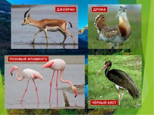 ДРОФА РОЗОВЫЙ ФЛАМИНГО ДЖЕЙРАН ЧЁРНЫЙ АИСТ