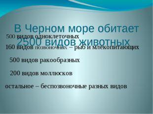 В Черном море обитает 2500 видов животных остальное– беспозвоночные разных в