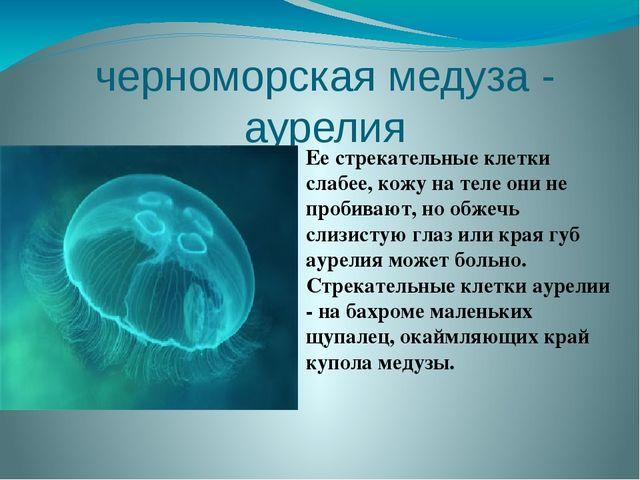 черноморская медуза - аурелия Ее стрекательные клетки слабее, кожу на теле он...