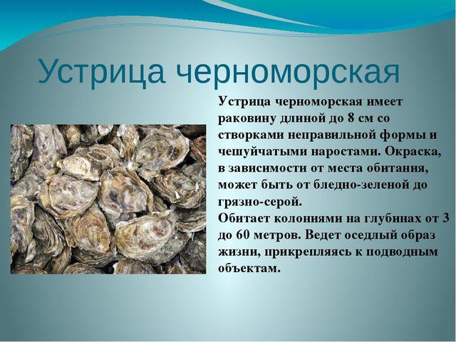 Устрица черноморская  Устрица черноморскаяимеет раковину длиной до 8 см со...
