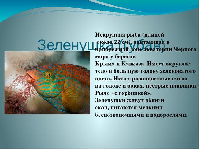 Зеленушка (губан)  Некрупная рыба (длиной около 22 см), обитающая в прибреж...