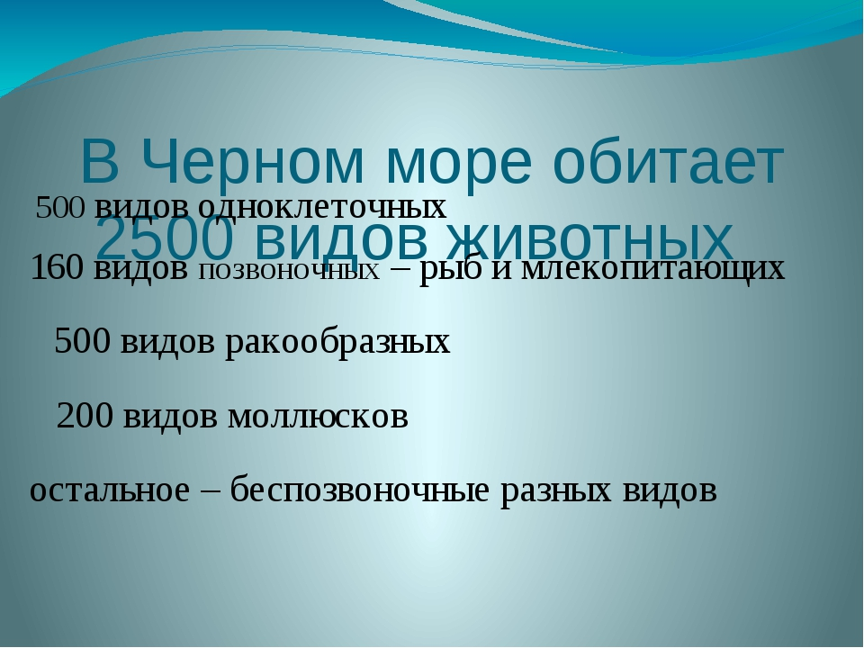 В Черном море обитает 2500 видов животных остальное– беспозвоночные разных в...