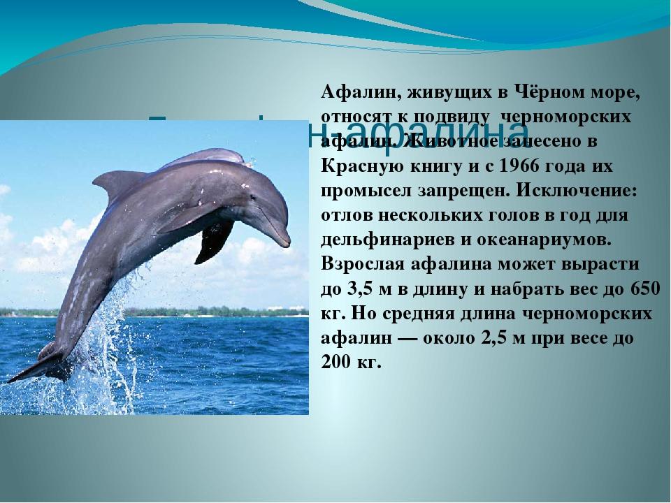 Дельфин-афалина  Афалин, живущих вЧёрном море, относят к подвиду черноморс...