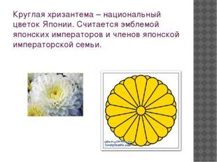 Круглая хризантема – национальный цветок Японии. Считается эмблемой японских