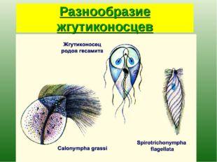Разнообразие жгутиконосцев