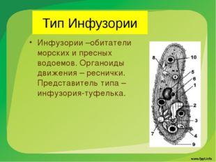 Тип Инфузории Инфузории –обитатели морских и пресных водоемов. Органоиды движ