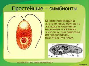 Простейшие – симбионты Многие инфузории и жгутиконосцы обитают в желудке и ки