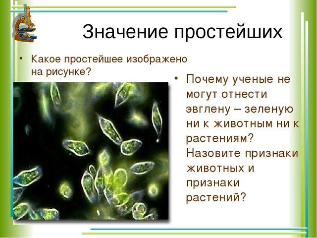 Значение простейших Какое простейшее изображено на рисунке? Почему ученые не...