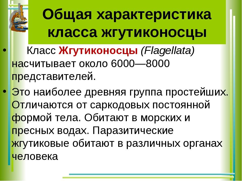 Общая характеристика класса жгутиконосцы КлассЖгутиконосцы(Flagellata) насч...