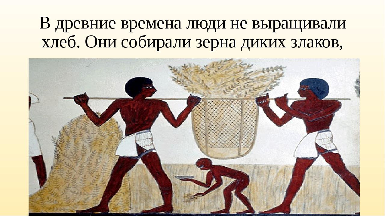 В древние времена люди не выращивали хлеб. Они собирали зерна диких злаков, р...