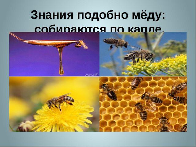 Знания подобно мёду: собираются по капле.