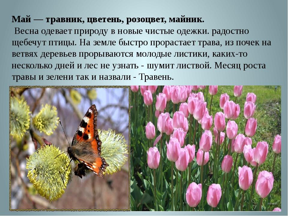 Май — травник, цветень, розоцвет, майник. Весна одевает природу в новые чисты...