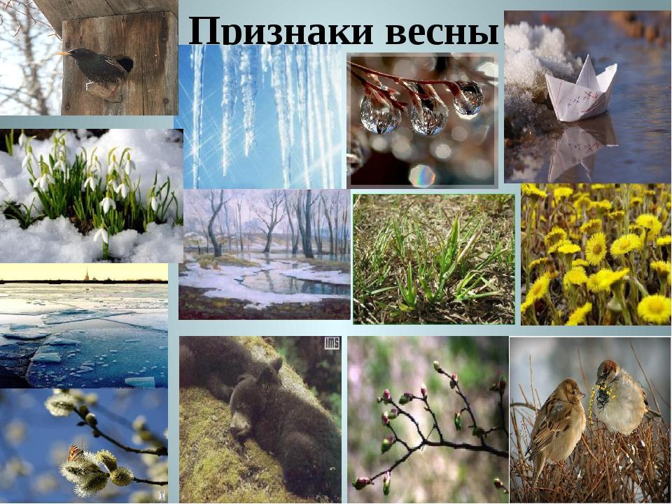 Картинки на тему признаки весны